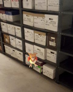 A Spearow in the Archives (Photo: Rodney Carter)